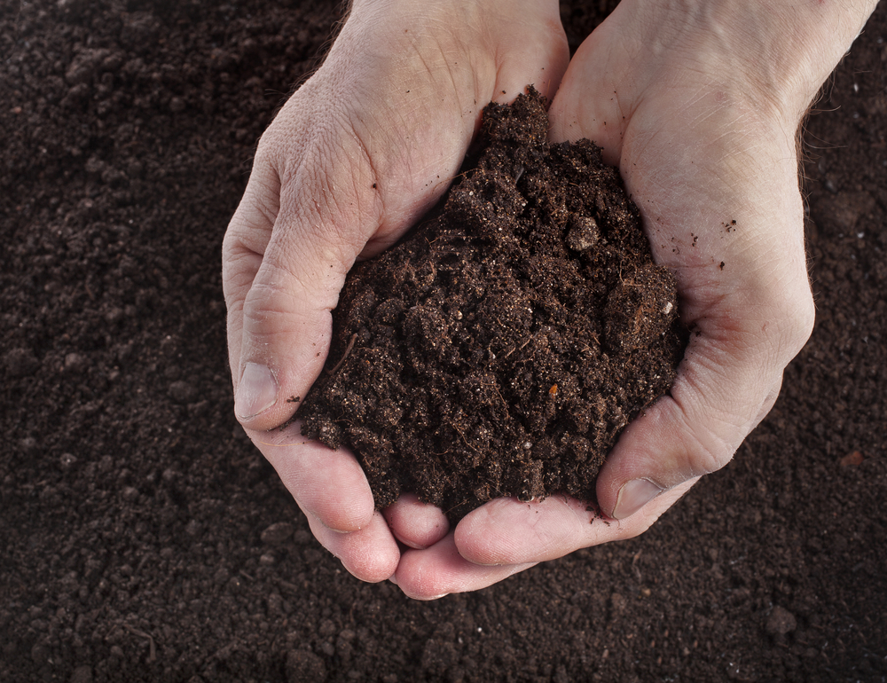 Garden Soil vs. Potting Soil