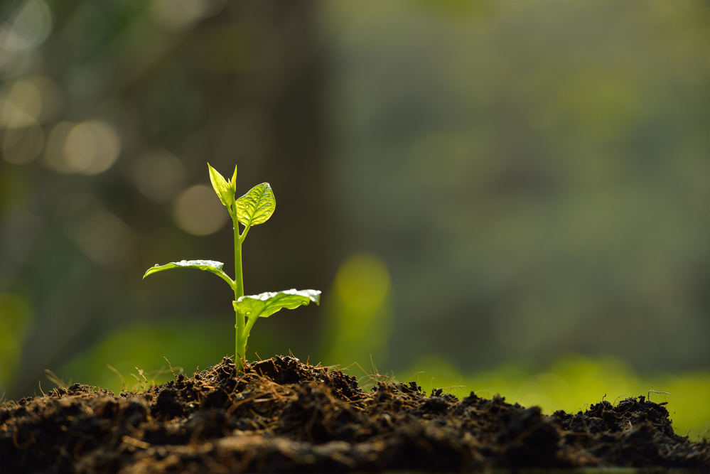 utah garden soil