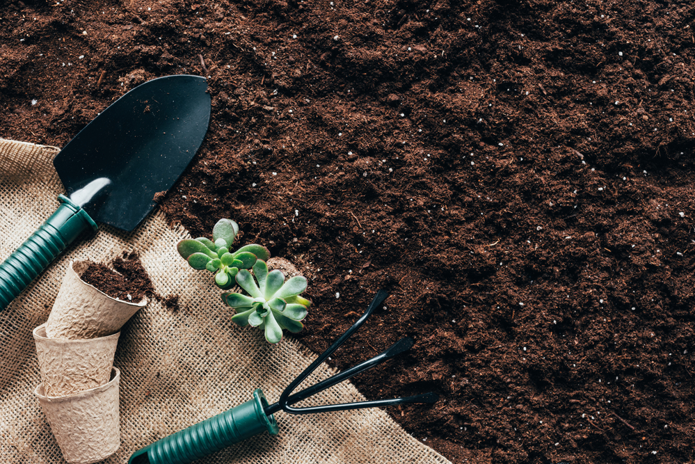 Garden Soil Tricks to Improve Your Flowers & Plants